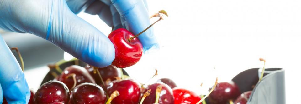 Rękawiczki jednorazowe i owoce